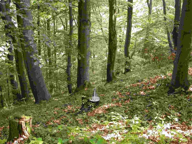 http://www.entomologicalservice.com/images/foto/vlci-kopec.jpg